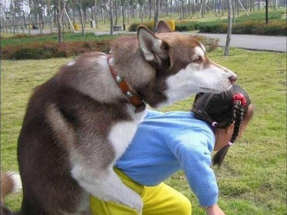 کلیپ جفت گيري حيوانات با انسان